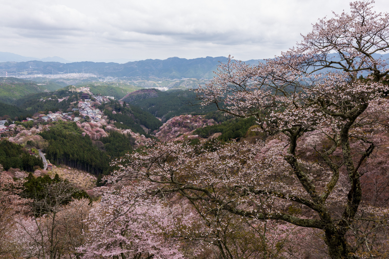 Mount Yoshino Hanayagura lookout cherry blossom